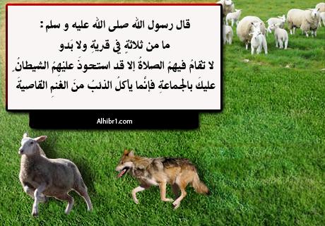 إنما يأكل الذئب من الغنم القاصية